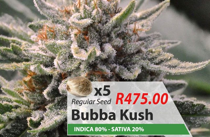 bubba-kush-weed-cannabis-seeds-for-sale-South-Africa