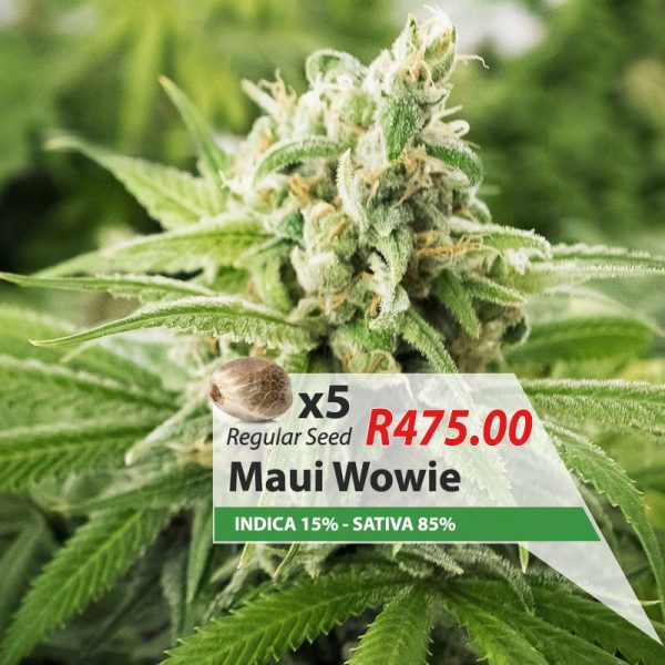 Maui Wowie cannabis seeds South Africa